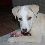 No entendemos como es posible que está #cachorra aún no tenga familia. #Adopción para Dama #Salamanca http://t.co/9qHqsUPIZM