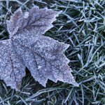 Frost advisory in effect for Toronto, much of Ontario http://t.co/iBJesLJd0X http://t.co/nXz3Vvnsdp