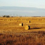 Calgary man faces fraud charge in hay theft worth $800K http://t.co/MwsxgsCSx8 http://t.co/u8tL458uKJ