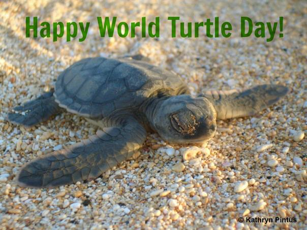 Today is #WorldTurtleDay! Find out more about the Endangered green turtle: http://t.co/l7zesYgQUt http://t.co/K3FG3q8mgX
