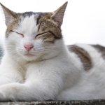 【にゃんこ】いたるところで昼寝する台湾の猫たち(画像多数) http://t.co/rGHdhIPvvo http://t.co/p2ODAkGqpd