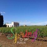 Un #buongiorno dedicato alla natura #Puglia http://t.co/ecXXFkx4yB
