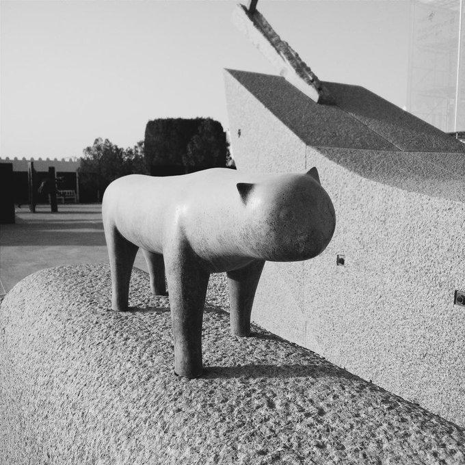 #MuseumCats @MathafModern, Doha, Qatar #vscocam http://t.co/PKje7Ifizn