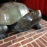 Happy National Turtle Day! As always... #FearTheTurtle http://t.co/0ZhoZWmOfY
