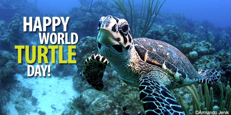 Happy World Turtle Day!  #WorldTurtleDay http://t.co/se8v0ov9vx