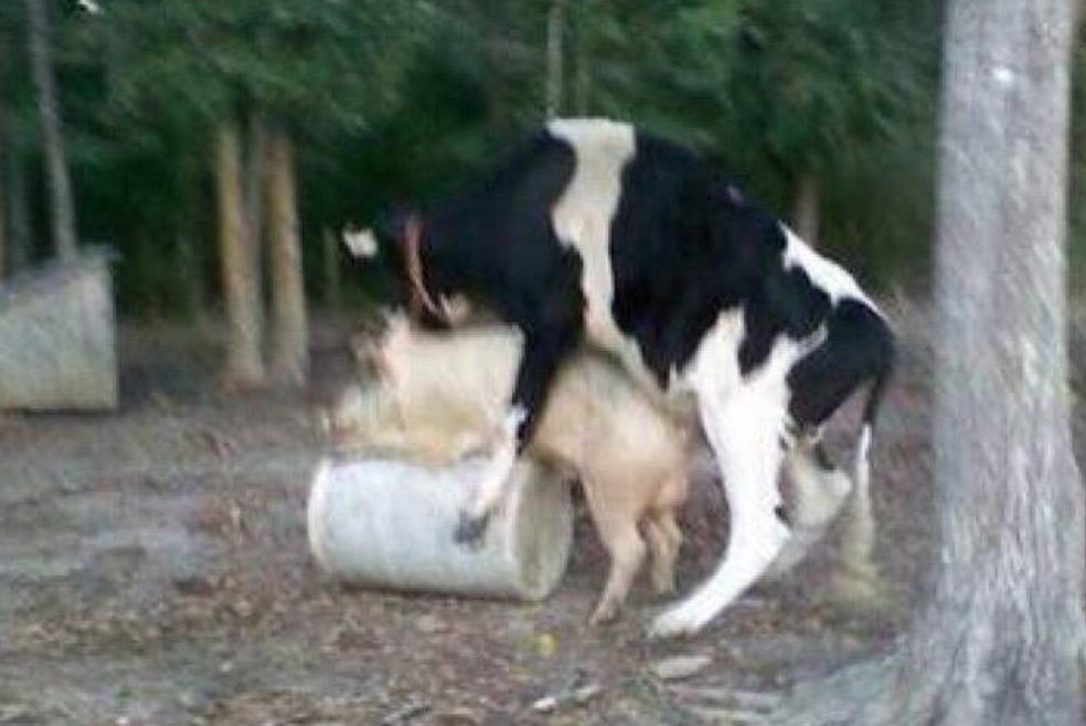 How bacon cheeseburgers are made.