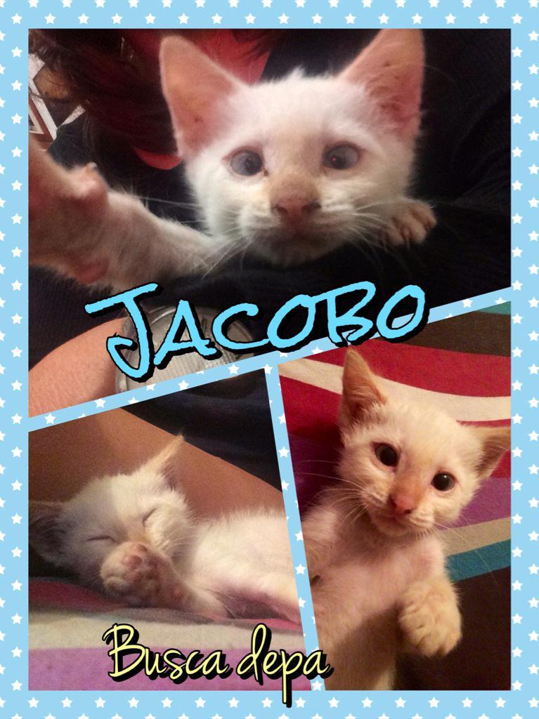 Jacobo les dice hola y busca depa amoroso para vivir... #adopción 2meses @En_laDelValle @LaRomaDF gracs por RT http://t.co/GThvWrbJAe