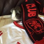 Our Guinea Pig Johnny believes! #believe #utb @alibrownlee http://t.co/9fSeWg2TTn