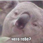 Когда меня рано будят в выходной http://t.co/irgtZdK2F8