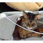 ネコをおなかにインできる「にゃんガルーパーカー 」登場 http://t.co/8uMKp7UZx8 http://t.co/K3b061whZl
