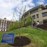 #WVU has a Newton apple tree, a descendent of the one that inspired Newton's theory of gravity http://t.co/SLnSti7hup http://t.co/IYWYWwljQy