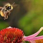 Beeutiful! #Oslo builds worlds first #bumblebee highway: http://t.co/1SzQtkrVam #savethebees #cdnpoli http://t.co/kcycwIm6Lv