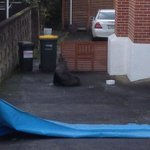 Seal causes commotion on Auckland road http://t.co/baPaGDY8Qp http://t.co/YIDDA559tw