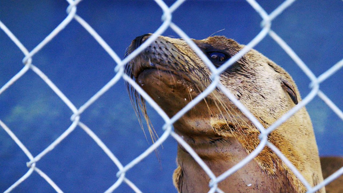 RT @vicenews: Thousands of sick and starving sea lion pups are washing up along the California coast: http://t.co/lgX4jfeIAD http://t.co/4R…