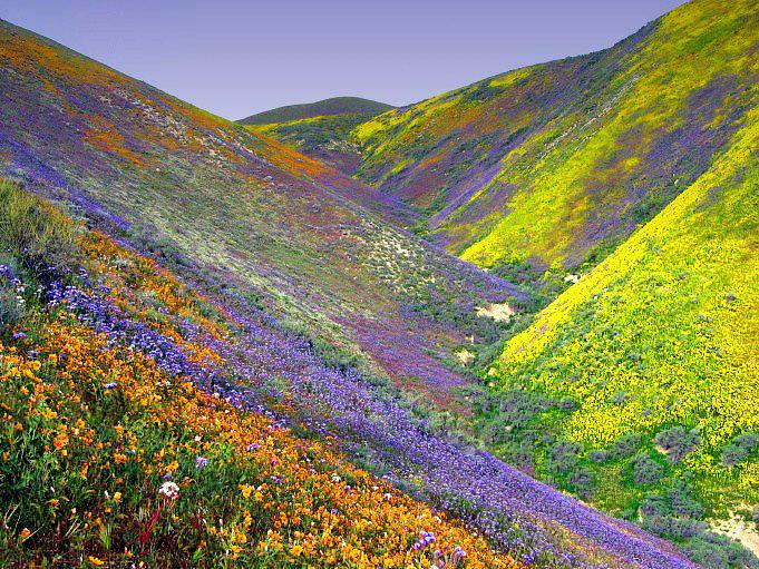 @narendramodi #IncredibleIndia Valley of Flowers Park renowned for its meadows of endemic alpine flowers #Uttarakhand http://t.co/RRIiV1n2bi