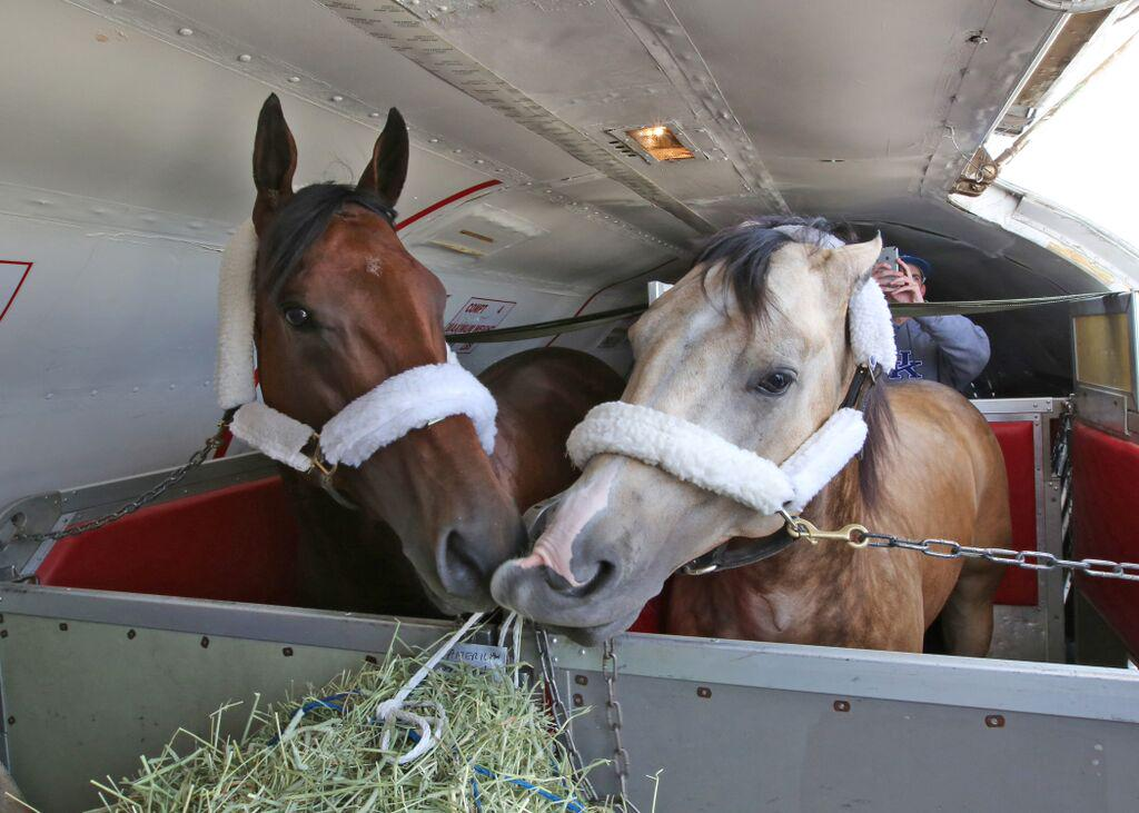 #TripleCrown winner American Pharoah & Bob Baffert's pony Smokey shared a snack upon landing in Louisville. (RPalmer) http://t.co/Fafmm77avb
