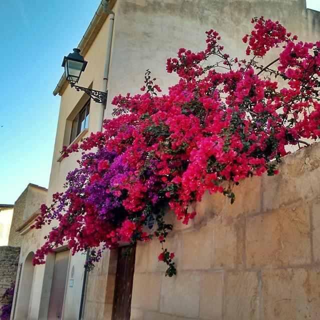 beautiful bougainvillea in Santanyí http://t.co/mM7nPtHiPM