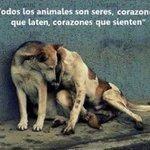 ¡No los abandones, ni maltrates! Buenos días @Vidalalejo99 @Guatevision_tv @Mascotas_tv http://t.co/ka0IysHWdY