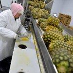 #Fresno produce company provides fresh cut fruit, veggies http://t.co/AdMR19LTXC via @bonhialee http://t.co/rom1WrOPU6