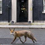La caza del zorro aun está prohibida en #Inglaterra: http://t.co/50cQu7hh5Y http://t.co/Iy38ctOc3R