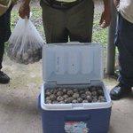 #PorSiNoLoViste Decomisan más de 370 huevos de tortugas en Bocas del Toro. #ProvinciasPA http://t.co/3GPaEnDdaw http://t.co/HGLwGoVlNC