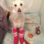 .@VancityBuzz on how PetFundr helps cash-strapped pet owners pay pricey vet bills. http://t.co/tIlJiOl4y4 http://t.co/HdlVsQL8rC