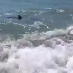 http://t.co/Kxx2vdHqq7 Los tiburones invaden las orillas de las playas españolas http://t.co/jmmJVgofTg