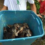 Duck habitat...at a high school? http://t.co/jgy8ysXaxF