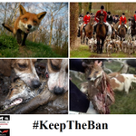 PLS SIGN & RT: For Foxes Sake, Dont Let DAVID CAMERON  Repeal #FoxHunting Ban! https://t.co/2vbMCXVuJy #KeepTheBan http://t.co/IBpD32qtTt