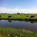 Zo slecht hebben onze koeien het nog niet dacht ik zo #zemblakoe http://t.co/lsslKRY0QO