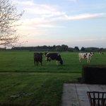 Collega boeren/innen aan slag om het eenzijdige beeld dat #zembla van de melkveehouderij schetst om te buigen! http://t.co/gmFOo23L6Z
