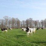 Opnieuw eenzijdig beeld melkveehouderij. Ben er trots op dat onze koeien heel weideseizoen naar buiten gaan#Zembla http://t.co/6LoTDJtduH