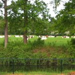 Vanochtend nog deze foto van buurvrouw ontvangen van onze koeien buiten #zemblakoe #zembla #frieslandcampina #weide http://t.co/uIxlpPEb3H
