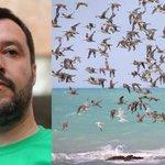 """#Salvini Salvini contro gli uccelli migratori: """"Facciano il nido a casa loro"""" http://t.co/Rhtso5AqmH"""