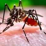 Virus similar al dengue y el chikunguña invade Latinoamérica. - http://t.co/BmKkNEYXTj http://t.co/82oJG5aFOn