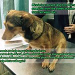 @AlfieBeardie  Please help a rescued dog from Romania, walk and live. PLS RT! Thank you! http://t.co/PDF8fc43i4 … http://t.co/S4LG90kAAZ