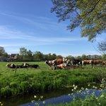 Dit zijn onze koeien in de wei. Rond en gezond. En geen 250. #zembla http://t.co/44lpHfrxqd