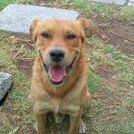 Ya es libre Capitán, el perro callejero que se salvó de morir con la ayuda de abogados http://t.co/Os2pGJCQsm http://t.co/POMxBjDCce