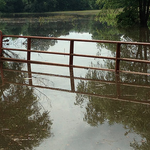 Flooding may mean heavy losses in western #Arkansas River Valley.  http://t.co/sgB9RpumSF #arwx #farming #ag http://t.co/frTog7OTLx