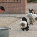 """""""@seunspice: As we buy fuel lets learn order from these canines. Every dog has its day. Be d #change. @Gidi_Traffic http://t.co/DimiUoN83L"""""""