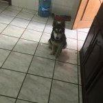¡Se busca Max! Perdido en Fracc Tulipanes, si alguien lo vio o cualquier información útil marcar 8446679808 #Saltillo http://t.co/VeOlnCcVgH