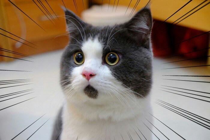 一度、シーシェパードさんからクソリプ頂いたので真っ向から言い合いしたんですよ。「カンガルーとワニ食ってる人達に言われたくない」ってそしたらなんて言ったと思います?「人の文化に口出しすんな!!!」ですよ。ぽかーんですよ。 http://t.co/GQ6poFtmsi