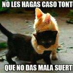 RT @a_n_i_m_a_l_e_s: Los Gatos Negros No Dan Mala Suerte, Dan Amor. #AdoptaUnGatoNegro 🐱💚😘 http://t.co/yAp9iUx3Xz
