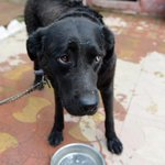 Almost half of stray dogs destroyed in some areas http://t.co/6F9we0IetU http://t.co/NTY2rzC92o