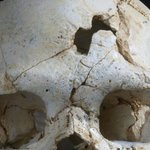Prehistoric skull reveals oldest known murder http://t.co/E2fLTujz1O via @IrishTimesWorld http://t.co/Od1T4k9Aji