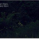 여름밤 달빛속으로 걸어가는 가족들이 있었으니.. 이들은 반딧불이 탐사단! 우리가족도 참여해볼까? ♣6월1~5일까지 선착순 모집 환경도시에코성남(http://t.co/DGz8hPry3B)에서 신청하세요! http://t.co/bue1wd6shY