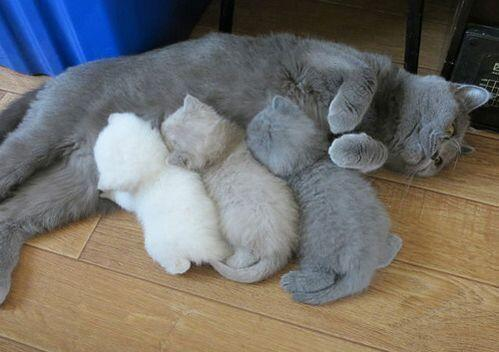 出産中にママニャンコのトナーが切れまして…。 RT @CuteAnimalsBaby: The kitten color printer ran out of ink mid job. http://t.co/r7S1dE6ZGD