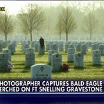 ICYMI VIDEO: Amazing photo of Bald Eagle perched on soldiers gravestone touches hearts http://t.co/tCTOZLxEHJ http://t.co/epMbMd32wE