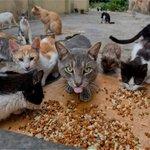 #Fotos Así luce la casa que es refugio de gatos abandonados en Barranquilla http://t.co/a3RfWg8DGh http://t.co/eDAJNksZf7