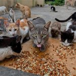 Así luce la casa que es refugio de cientos de gatos abandonados en Barranquilla. Las autor… http://t.co/bJkmMh0g8H http://t.co/Ri5ZpN6pRn